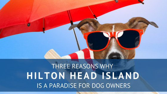 Pet Friendly Hilton Head